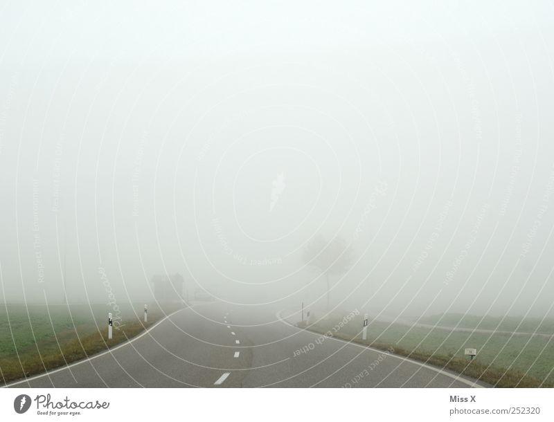 Weg ins Nichts Wetter schlechtes Wetter Nebel Verkehr Verkehrswege Straße trist grau bedrohlich Sicherheit Verkehrssicherheit Nebelschleier Nebelstimmung