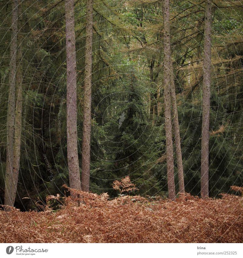 Waltz Boston Umwelt Natur Landschaft Herbst Baum Farn Wildpflanze Wald Goldenbaum dunkel nachhaltig natürlich wild braun gelb grün ruhig Einsamkeit ästhetisch