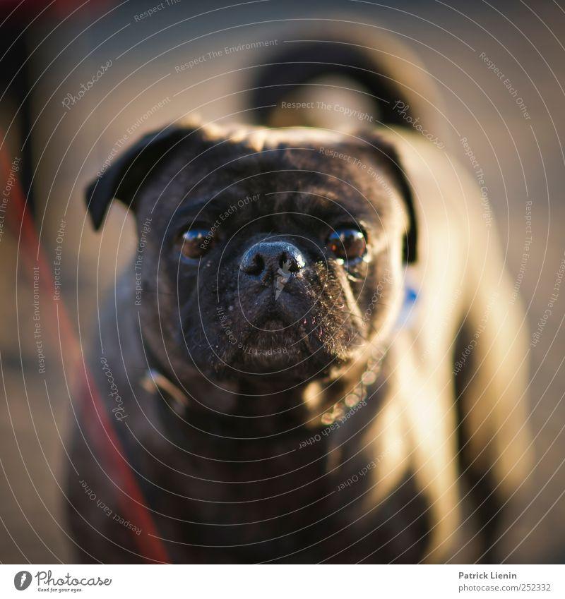 not amused Tier Auge Leben Umwelt Gefühle Hund Angst frisch ästhetisch authentisch bedrohlich einzigartig außergewöhnlich geheimnisvoll skurril Leichtigkeit
