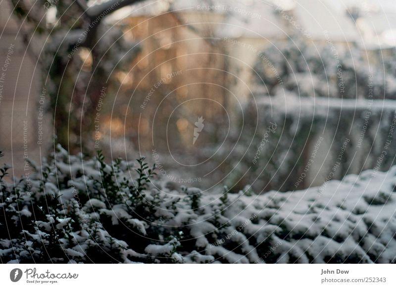 Neuschnee Pflanze ruhig Winter Haus kalt Schnee Garten Sträucher Frost Vergänglichkeit Gelassenheit Schneelandschaft stagnierend Hecke Stadtrand Einfamilienhaus