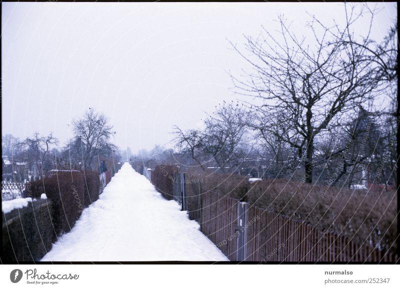 winterflucht Lifestyle Freizeit & Hobby Ferne Garten Umwelt Natur Winter Klima Klimawandel Nebel Eis Frost Schnee Menschenleer Hütte Fußgänger Wege & Pfade