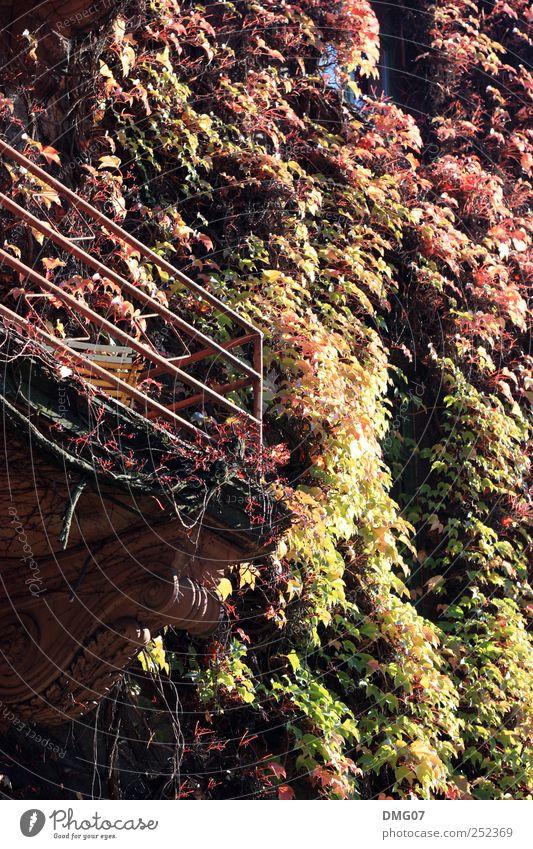 100% Herbst Natur Sonne Sonnenlicht Pflanze Efeu Dorf Kleinstadt Stadtzentrum Stadtrand Altstadt Haus Balkon alt schön gelb gold rot Balkonpflanze Stuhl