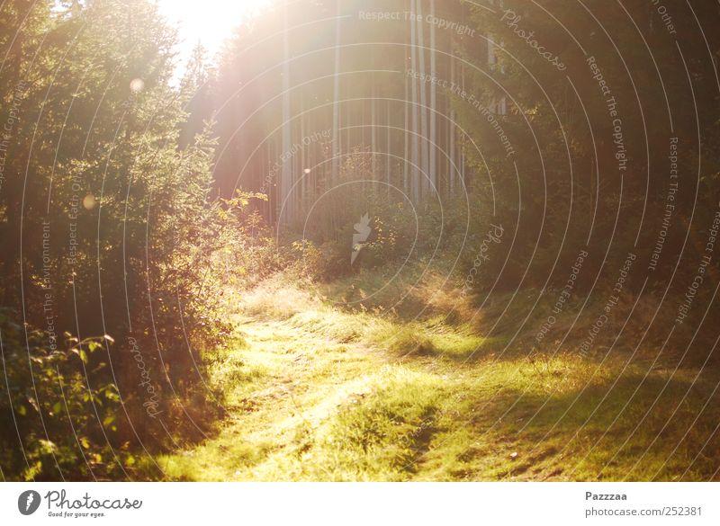 Waldspaziergangsimpression Natur Baum Pflanze Sonne Sommer Erholung Umwelt Gras wandern Schönes Wetter genießen Waldlichtung Thüringen Indian Summer