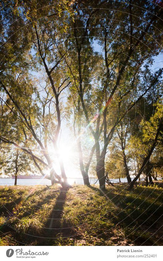 Indian Summer Natur schön Sonne Sommer Ferien & Urlaub & Reisen Strand Meer ruhig Ferne Wald Umwelt Landschaft Küste Wetter Freizeit & Hobby Ausflug