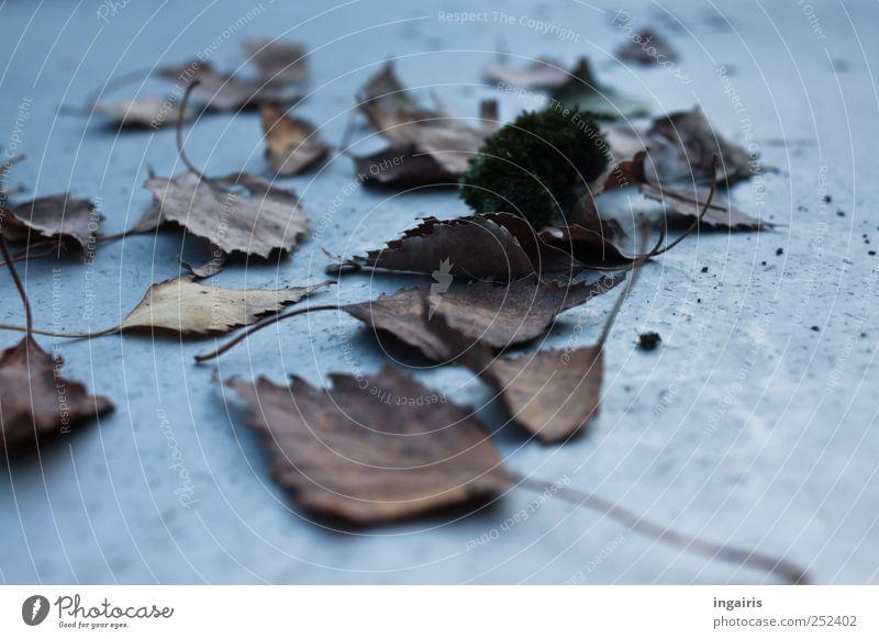 Mal wieder Herbst Tisch Pflanze Blatt natürlich trocken braun grau Stimmung Frustration welk herbstlich Herbstlaub Herbstbeginn Jahreszeiten Birkenblätter