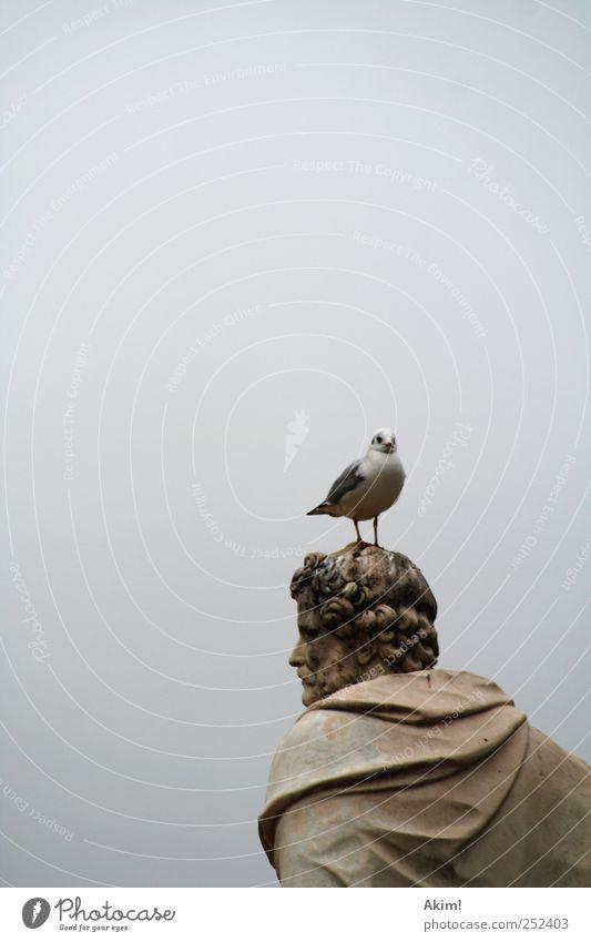 (Sch)möwe auf Kopf weiß Tier grau hell Kunst braun Vogel warten ästhetisch Macht Kultur Paris Vergangenheit Statue Skulptur silber