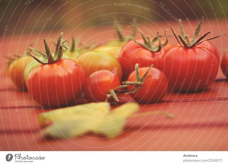 Rote und grüne Tomaten aus eigener Ernte auf einem rotbraunen Untergrund aus Holz Lebensmittel Gemüse Salat Salatbeilage Ernährung Bioprodukte