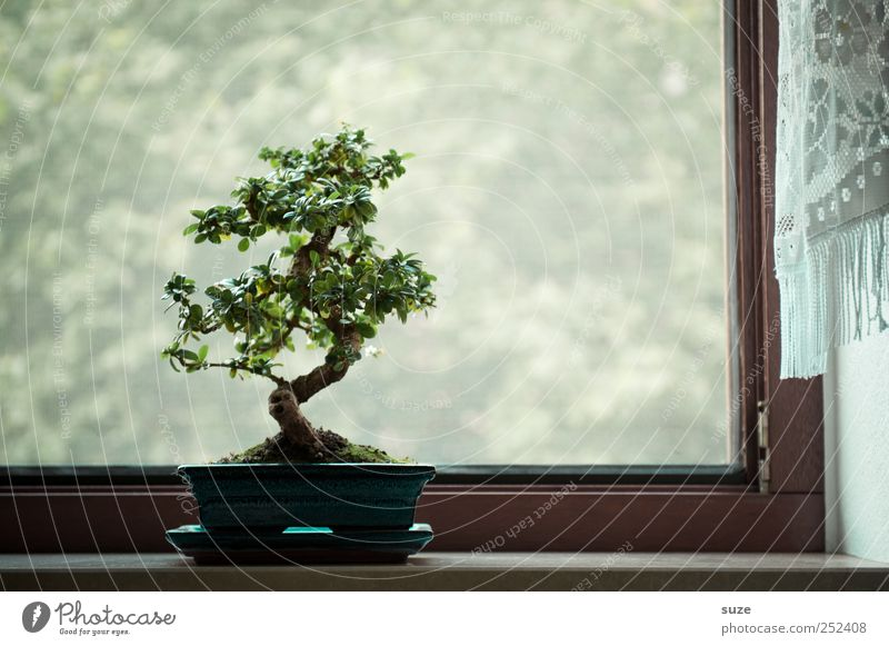 Am Fenster harmonisch Zufriedenheit ruhig Freizeit & Hobby Kunst Kultur Pflanze Luft Baum Wachstum klein grün Gelassenheit Weisheit Frieden Religion & Glaube