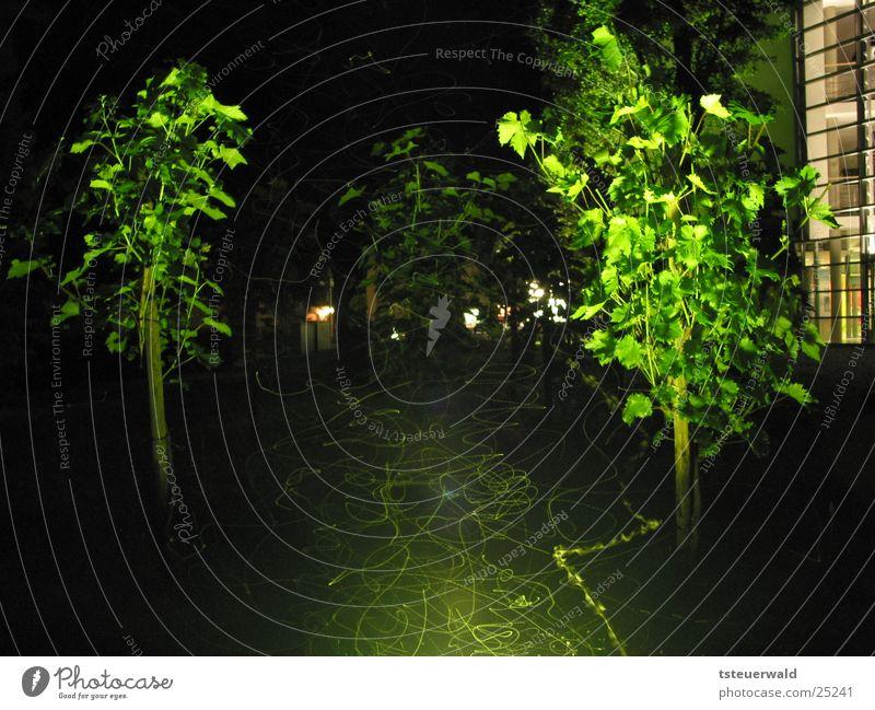 Falter und Fliegen in der Nacht Wein Langzeitbelichtung Insekt Beleuchtung fliegen