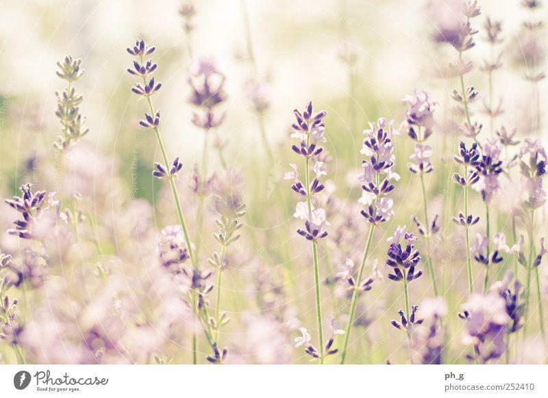 Natur Pflanze Sommer Blume Garten Idylle Schönes Wetter