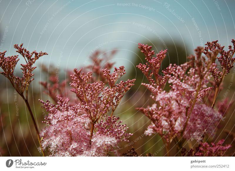 dabeisein ist alles Natur Pflanze blau Sommer Erholung Landschaft Blatt Umwelt Blüte Freiheit rosa Horizont Design Freizeit & Hobby Fröhlichkeit Lebensfreude