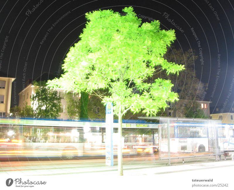 Baum vor Haltestelle Baum Straße Verkehr Station Bus Laubbaum Heilbronn
