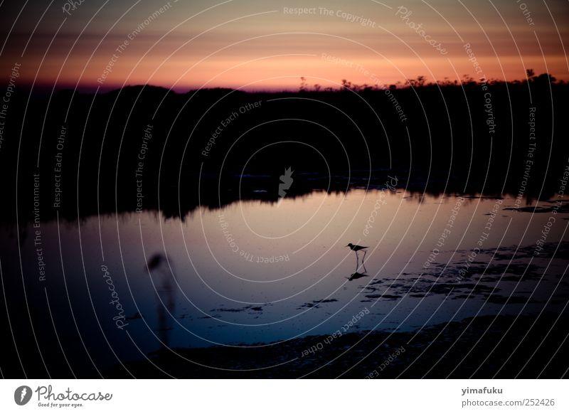 Natur Wasser schön Sommer Ferien & Urlaub & Reisen Tier schwarz Vogel rosa Wildtier einfach Schönes Wetter Frankreich Nachthimmel demütig 2011