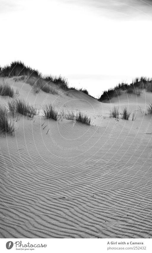 Spiekeroog I dune ridge Natur schön Umwelt Landschaft Gras Sand elegant hoch wild Urelemente außergewöhnlich einfach Nordsee Stranddüne Gipfel