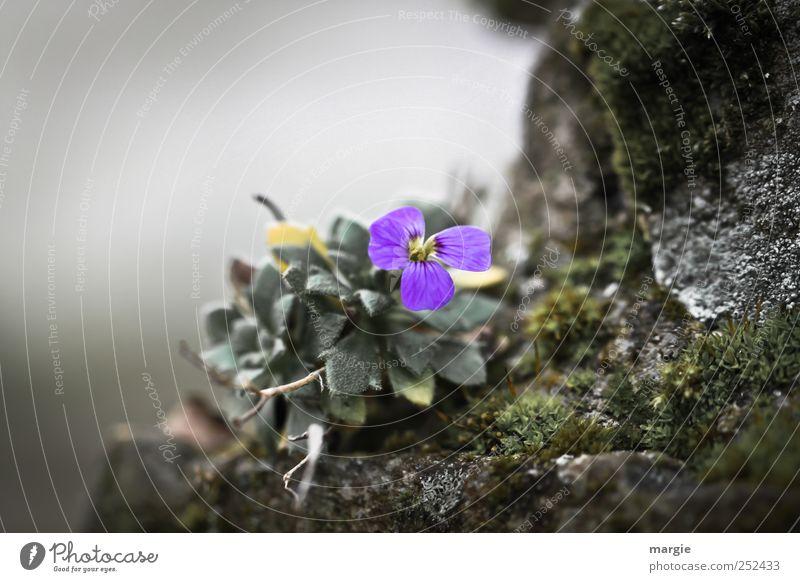 Mauer - Blümchen Natur Pflanze Blume Einsamkeit Landschaft Blatt ruhig Tier dunkel Berge u. Gebirge Umwelt Traurigkeit Blüte Gefühle Frühling Stimmung