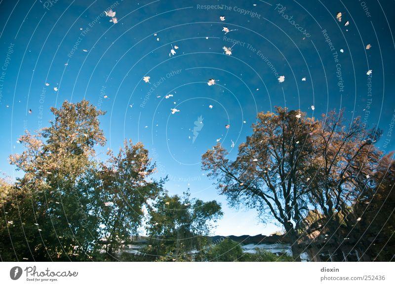 [Chamansülz2011] Metamorphoesie Himmel Natur Wasser Baum Pflanze Blatt Herbst Umwelt Landschaft Wachstum Fluss Flussufer Wolkenloser Himmel Neckar