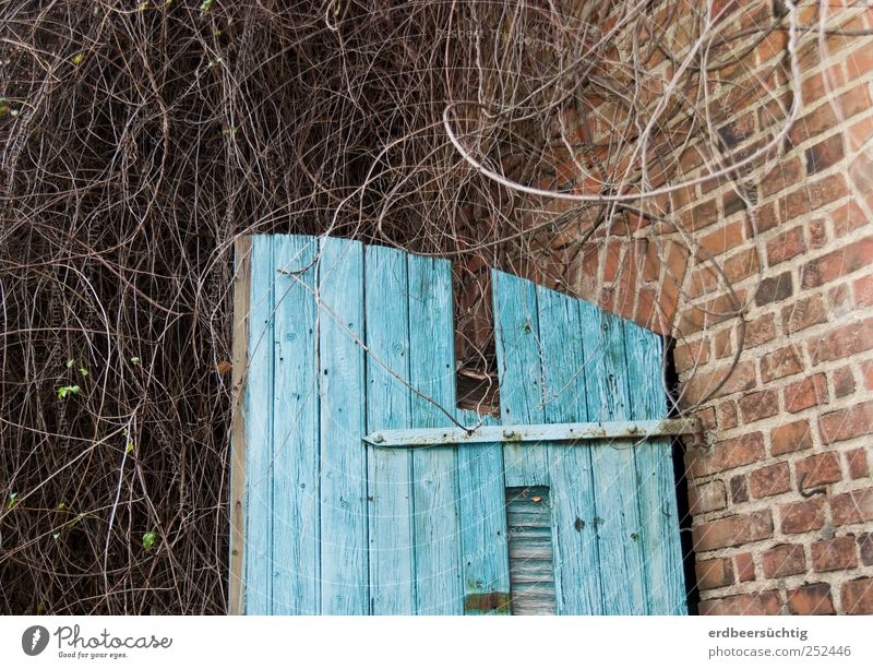 zugewuchert Pflanze Sträucher Wildpflanze Hütte Scheune Mauer Wand Tür Stein Holz Backstein alt Wachstum Idylle verwittert bewachsen blau abblättern