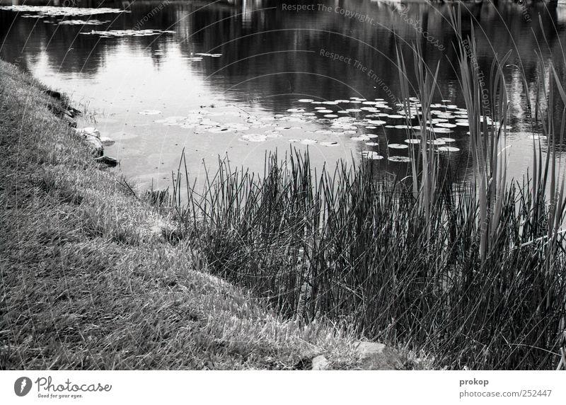 Ein Stück Teich Natur Wasser Pflanze Blatt ruhig Einsamkeit Umwelt Landschaft Gras Küste See Park Erde natürlich Sträucher Trauer