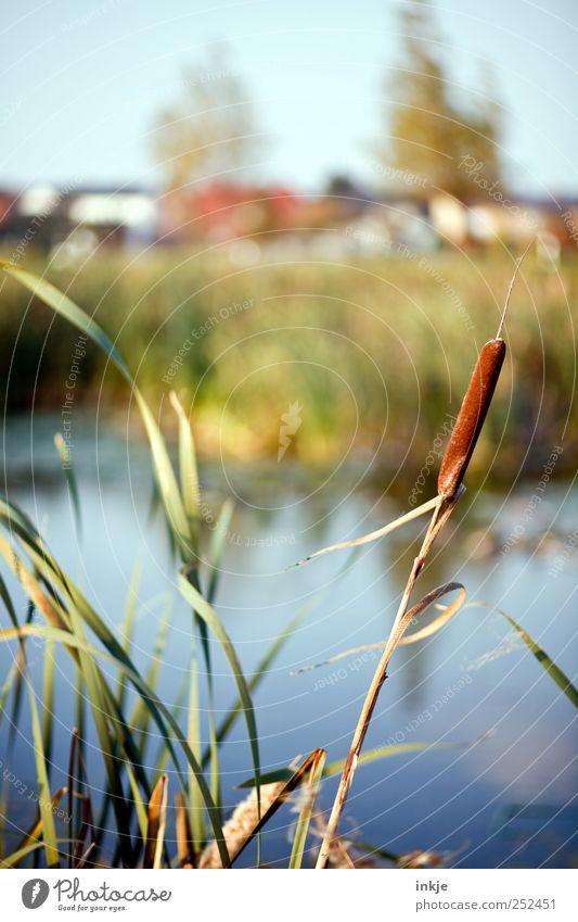 Haus am See Natur Wasser Pflanze Herbst Wiese Landschaft Gras Stimmung Freizeit & Hobby natürlich Ausflug Wachstum stehen Häusliches Leben