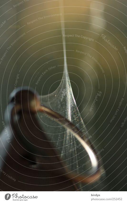 Spinnenspuren Metall Netz Netzwerk ästhetisch dünn Kreativität Natur Kreis Öse Spinnennetz zusammenführend befestigen fein Verbindung filigran verstaubt