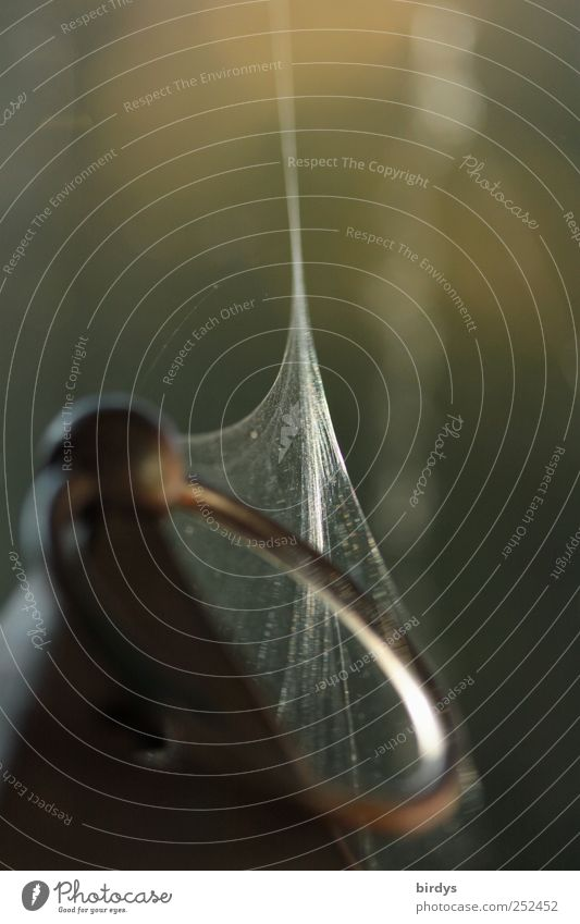 Spinnenspuren Natur Metall ästhetisch Netzwerk Kreis dünn Kreativität Verbindung fein Unbewohnt filigran Spinnennetz befestigen Öse