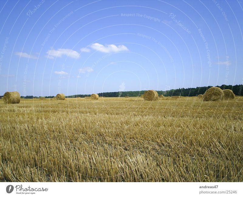 Erntezeit Feld Stroh Landwirtschaft Strohballen Getreide