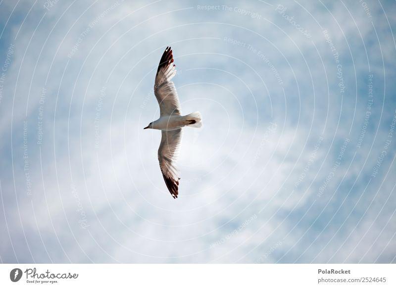 #A# Der hohe Vogel... Kunst ästhetisch Leichtigkeit fliegen fliegend Küste Möwe Möwenvögel Flügel Tragfläche hoch Luft Ostsee Tier Farbfoto Gedeckte Farben
