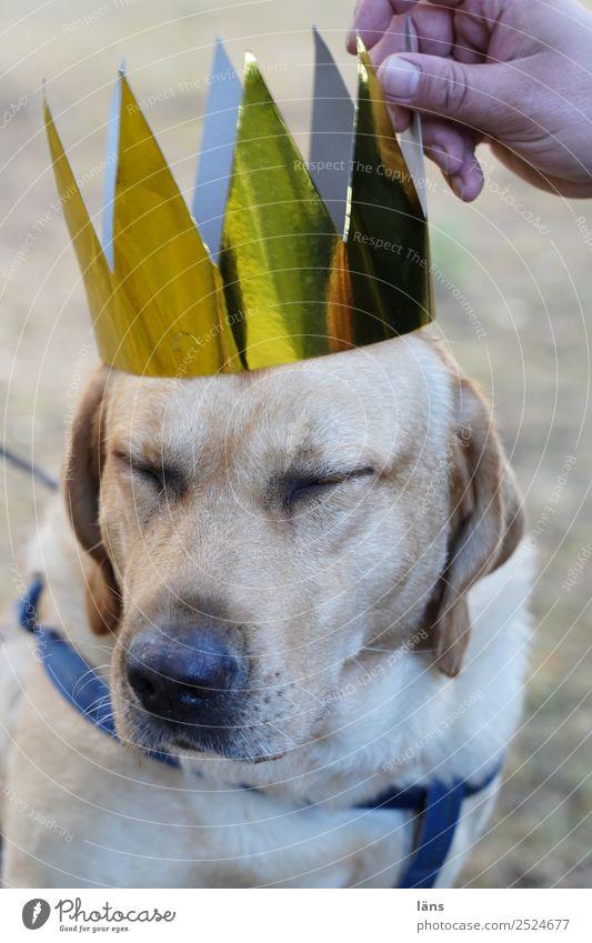 Die Krönung Hund schön Tier Erfolg Coolness Haustier Optimismus Treue Tapferkeit Akzeptanz