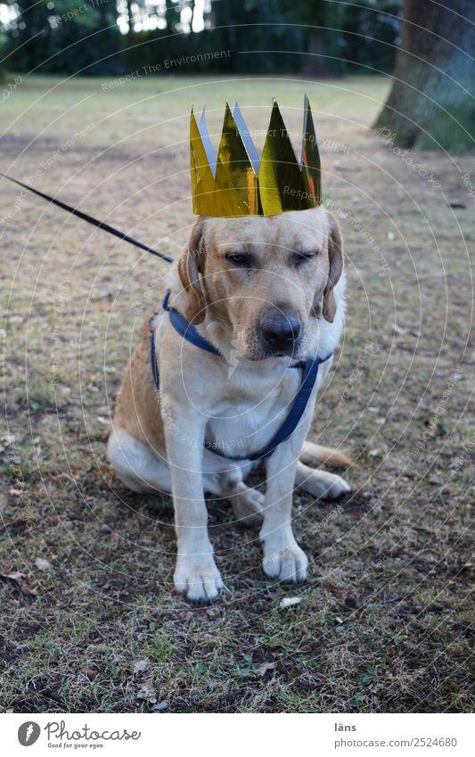 Königliches Protokoll Tier Haustier Hund 1 warten Coolness loyal Treue Verantwortung achtsam Verlässlichkeit Vorsicht geduldig ruhig Selbstbeherrschung