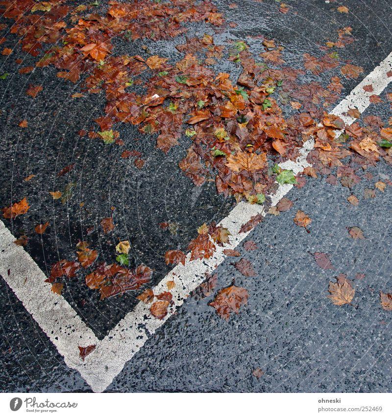 Herbst Wetter schlechtes Wetter Regen Straße Parkplatz Traurigkeit Trauer Müdigkeit nass Farbfoto Außenaufnahme Strukturen & Formen Menschenleer