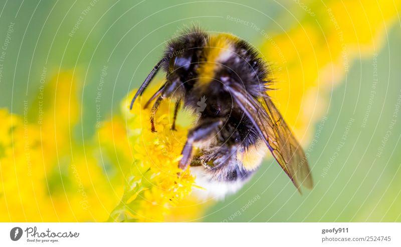 Arbeitstier Natur Sommer schön Blume Tier Umwelt Frühling Blüte Wiese Garten Arbeit & Erwerbstätigkeit Ausflug Park elegant Wildtier Blühend