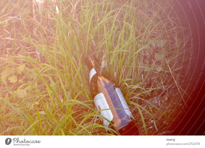 illegal entsorgt Natur grün Einsamkeit Gras braun liegen glänzend trist Glas Fröhlichkeit einfach Getränk Schmerz Bier Flasche Alkohol