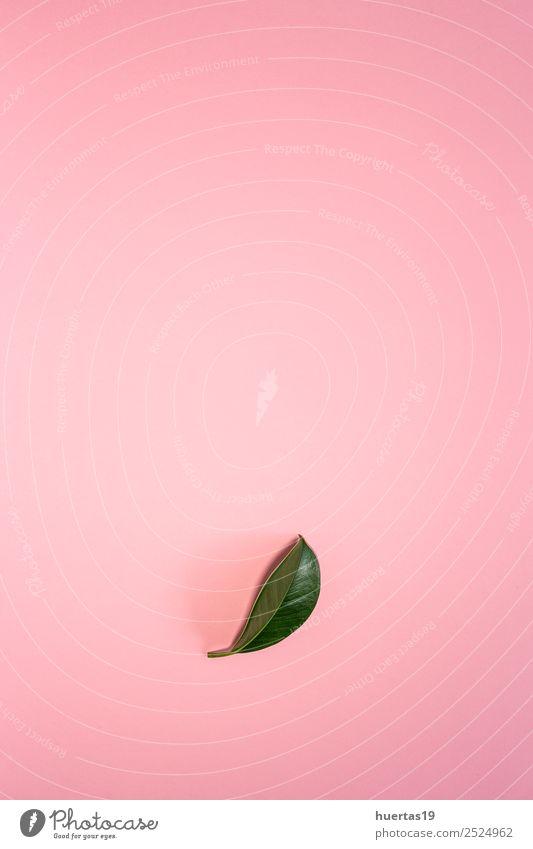 Blatt einer tropischen Pflanze exotisch Garten Natur Baum Wald Urwald natürlich grün Schot Palme Handfläche Ficus flache Verlegung vereinzelt Bambus Hintergrund