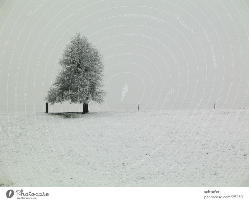 einsamer Winterbaum Baum Einsamkeit kalt Schnee grau Landschaft Eis Nebel Frost frieren