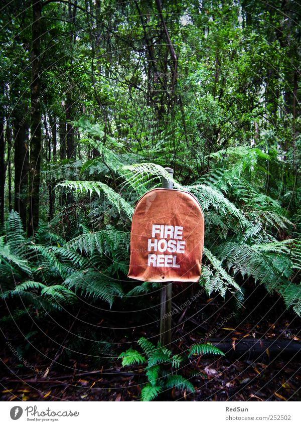 reine Vorsichtsmaßnahme Natur grün Baum Pflanze rot dunkel Feuer Sträucher Urwald exotisch Schlauch Farn löschen Vorsorge Hydrant