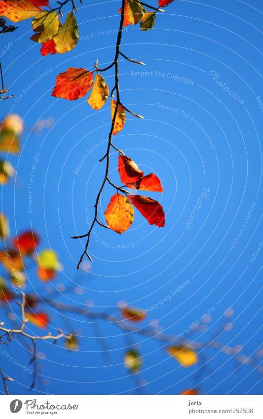 23.10.11 Himmel Natur Baum Pflanze Blatt Umwelt Herbst Schönes Wetter Wolkenloser Himmel