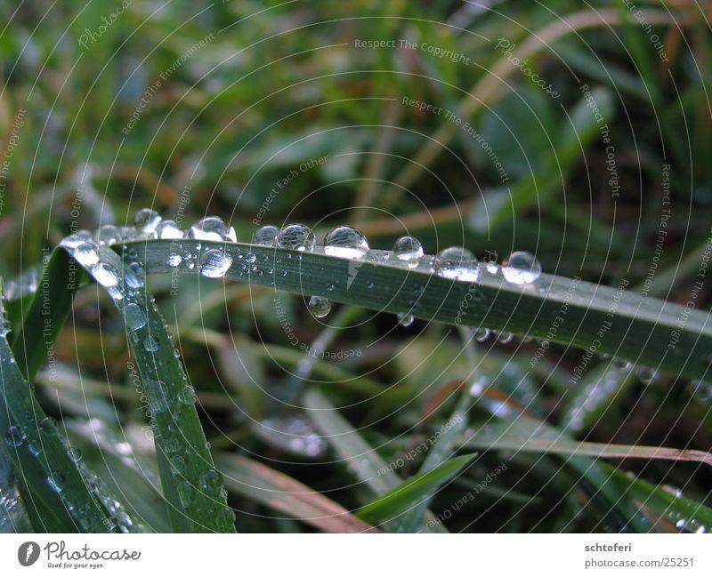 from bug's eyes Wasser Gras Regen klein Nebel Wassertropfen Seil