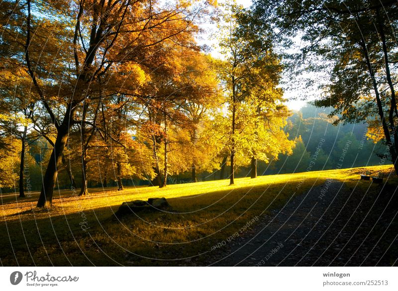autumn glow Natur schön Baum Pflanze Sonne Blatt Wald gelb Herbst Umwelt Landschaft Gras Wege & Pfade Erde Park orange