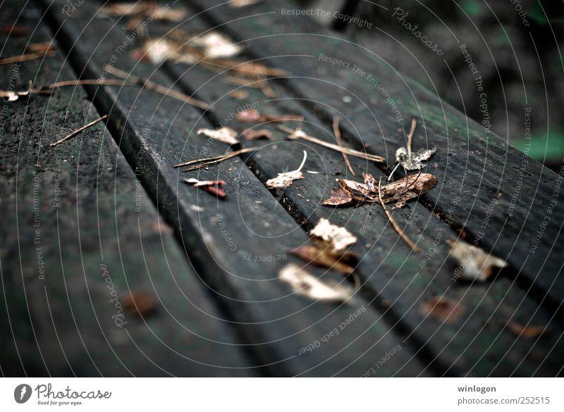 laub Natur Herbst Pflanze Blatt Bank Park alt gelb grau herbstlich Holz Leben Garten Zeit fallen liegen einfach nass schön Trauer trocken Herbstlaub Herbstwald