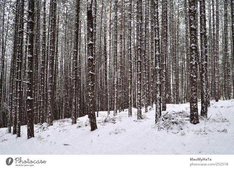 geblasener Schneewald Natur Landschaft Pflanze Wasser Wolken Horizont Winter Klima schlechtes Wetter Eis Frost Baum Park Wald Abenteuer Aggression chaotisch