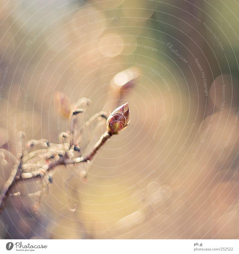 Winter's gone Natur grün Pflanze gelb Leben Blüte Frühling Park braun Sträucher Warmherzigkeit Blütenknospen Frühlingsgefühle Wildpflanze