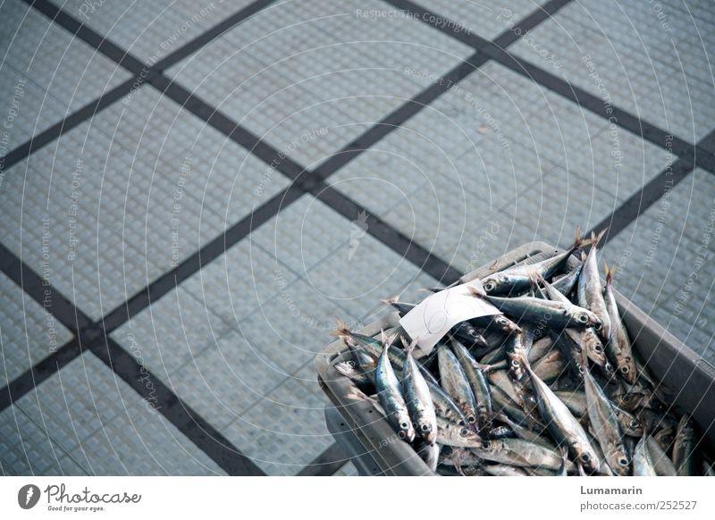 Trockendock Lebensmittel Fisch Ernährung Tier Wildtier Totes Tier frisch glänzend kalt grau Fangquote Kiste Kasten Bodenbelag PVC Quadrat Linie Angebot