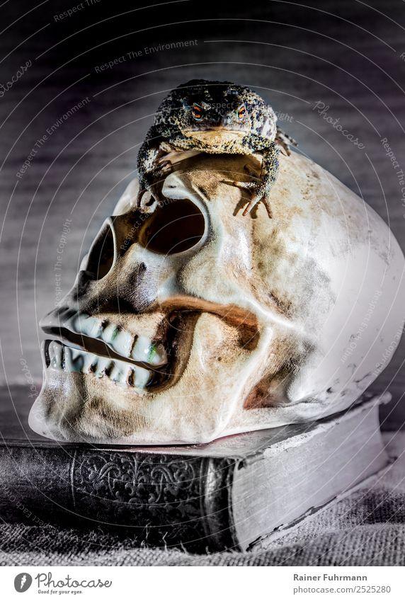 """ein altes Buch, ein Schädel und eine lebende Kröte Halloween Kunst Subkultur Tier Wildtier """"Kröte Erdkröte Bufo bufo"""" 1 dunkel gruselig Gefühle Stimmung"""