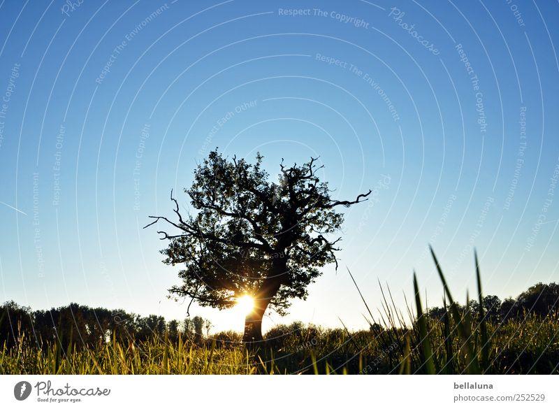 Abendsonne im Drömling Umwelt Natur Landschaft Pflanze Himmel Wolkenloser Himmel Sonnenaufgang Sonnenuntergang Sonnenlicht Sommer Herbst Schönes Wetter Baum