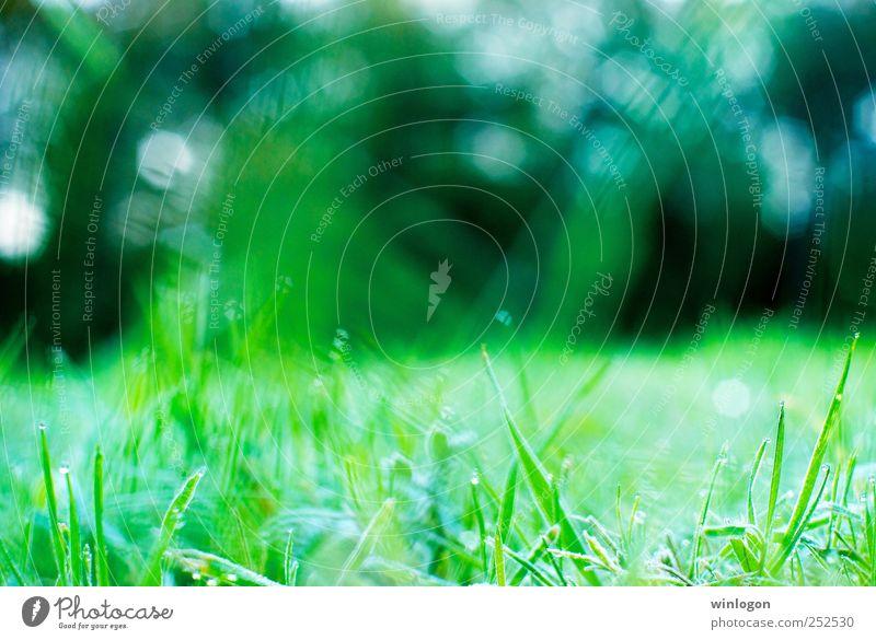 morning dew Natur Wasser grün schön Pflanze kalt Wiese Frühling Park Erde Wassertropfen frisch Frost Rasen nah Kräuter & Gewürze