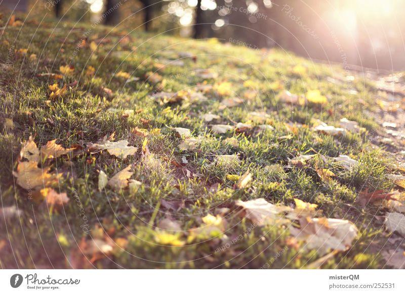 Herbstsonne. Natur grün Blatt Wiese Umwelt Landschaft Park ästhetisch Rasen Herbstlaub herbstlich Herbstfärbung Herbstbeginn Herbstwald Nebensaison