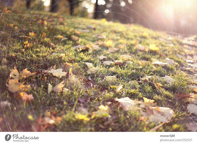 Herbstsonne. Umwelt Natur Landschaft ästhetisch Herbstlaub herbstlich Herbstbeginn Herbstfärbung Herbstwald Herbstwetter Herbstlandschaft Herbstwind Blatt Rasen