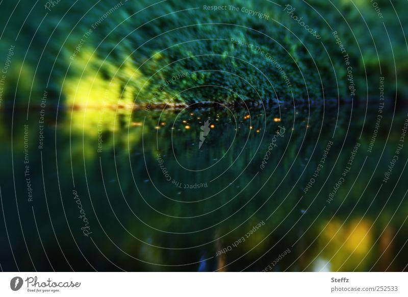 light dots Grünes Wasser dunkelgrün Seeufer glatt Ruhe gelb Wasseroberfläche Spiegelung Wasserspiegelung Lichtstimmung Lichtreflexe Lichtspiegelung Glanzlicht