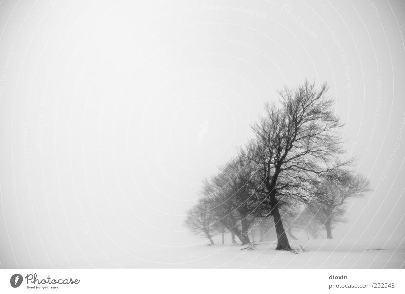 I dreamed about last winter Pt.1 Umwelt Natur Landschaft Winter schlechtes Wetter Nebel Eis Frost Pflanze Baum Baumstamm Ast Schauinsland kalt natürlich