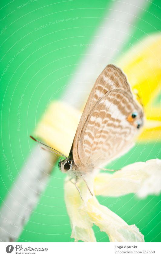 ...wieder keine Blüte Natur grün Einsamkeit Tier Umwelt Metall elegant warten fliegen gefährlich Wildtier Baustelle Vergänglichkeit Insekt Sehnsucht Kunststoff